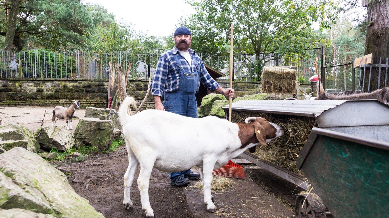 Mann steht mit Harke vor einem Anhänger mit Heu. Eine Kuh frißt gerade vom Heu.